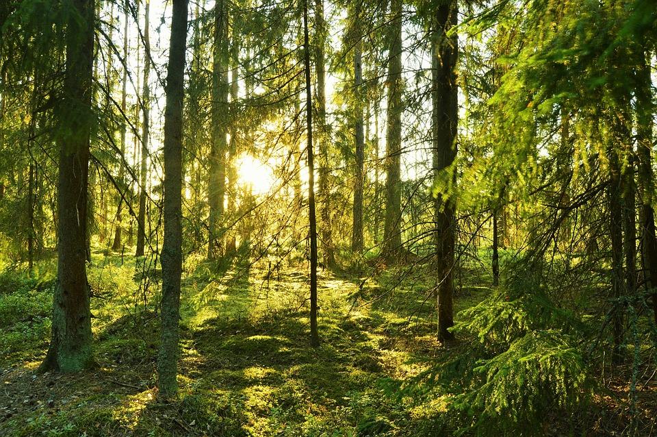 Skog Malung