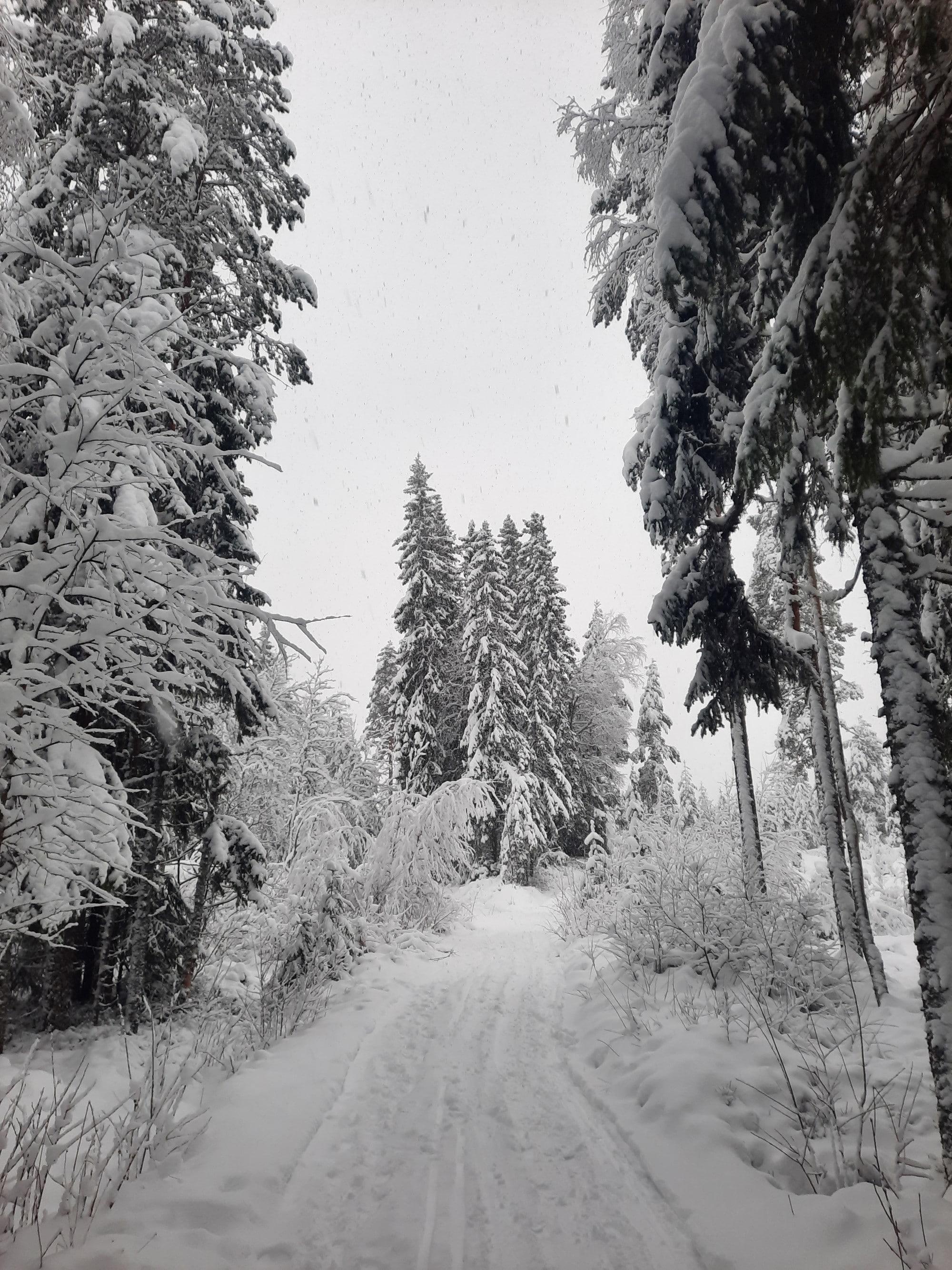 Sorskog Dalarna