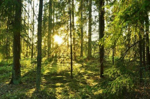 Natur i Dalarna